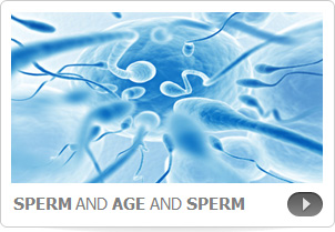 The Sperm of Aging Men